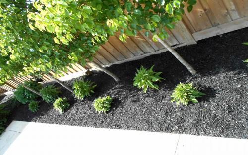 Backyard Planting  Design3