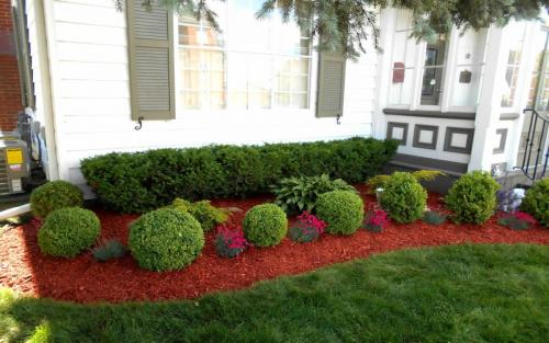 Evergreen Front Yard Pruning