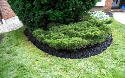Front Yard Evergreen Edging