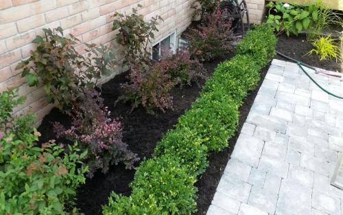 Garden Path Patio Planting