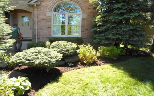 Mature Garden Cleanup  Pruning