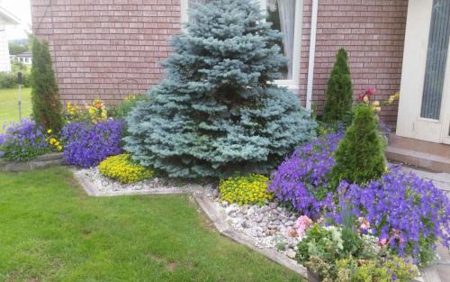 Plants Planting Colourful Perennials 2