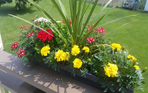 Plants Planting Colourful Perennials 4