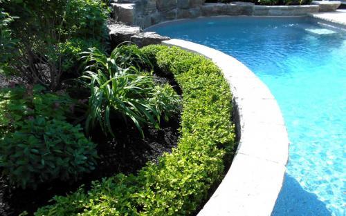 Pool Landscpaing Garden Beds