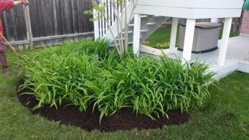 Small Garden Bed Design After