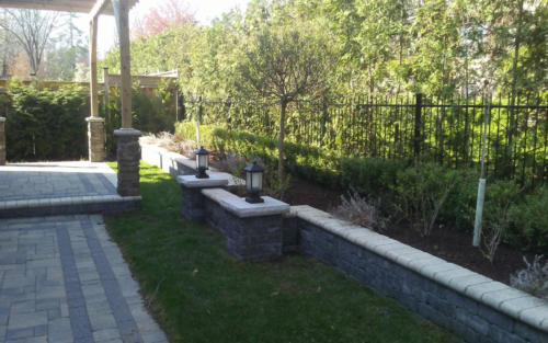 backyard boxwood hedge