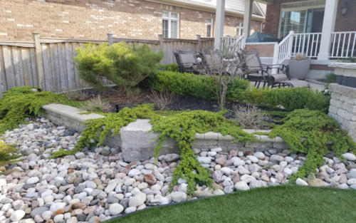 garden junipers with river stone