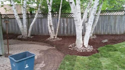 Backyard Pool Landscaping After 1