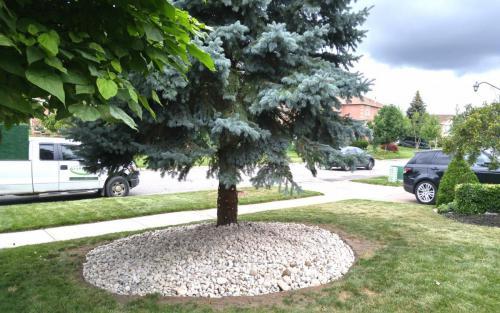 Spruce Tree River Stone Base2