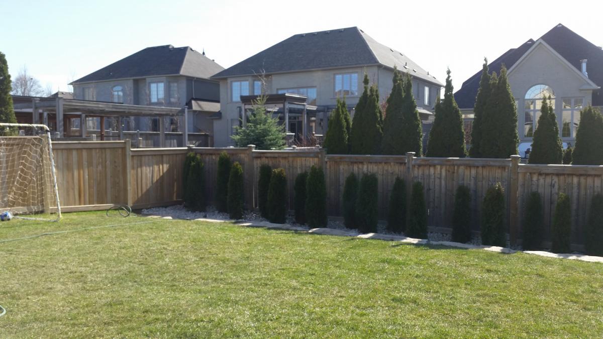 Backyard Cedar Hedge Planted 1