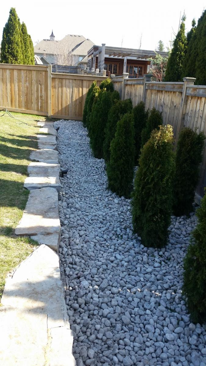 Backyard Cedar Hedge Planted 2