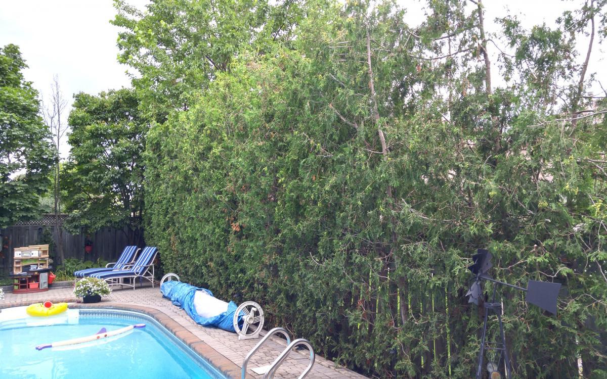 Backyard Privacy Hedge Installation