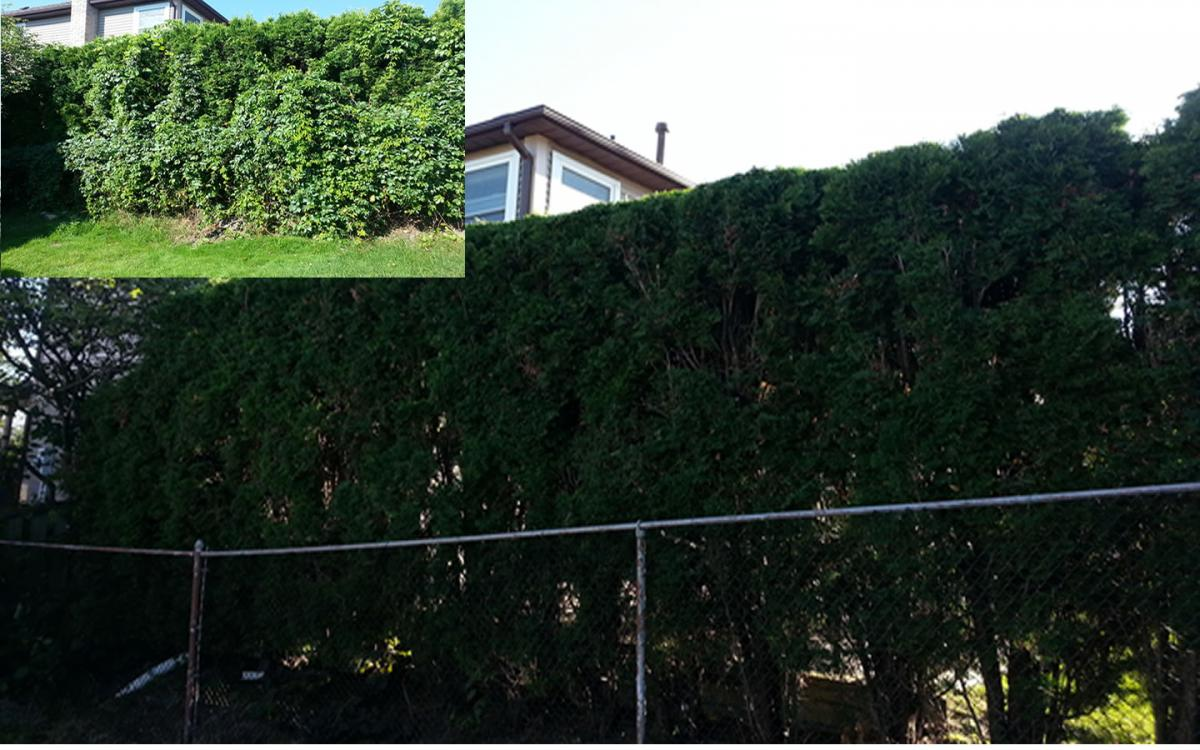 Hedge Pruning