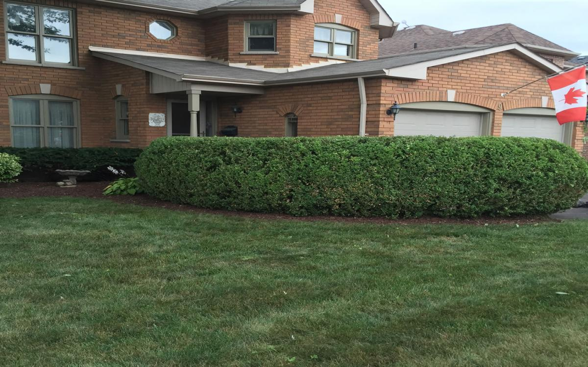 Hedge Shrub Tree Pruning Trimming Cutting