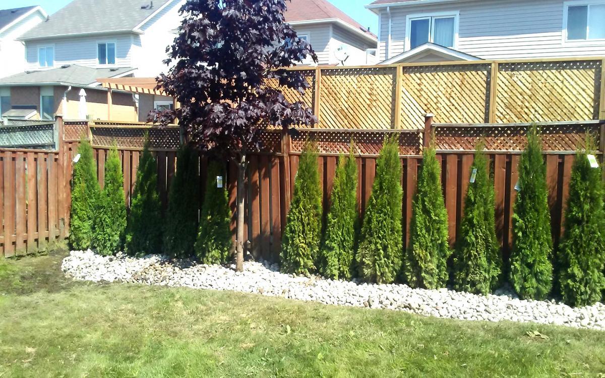Privacy Cedar Planting  River Stone1