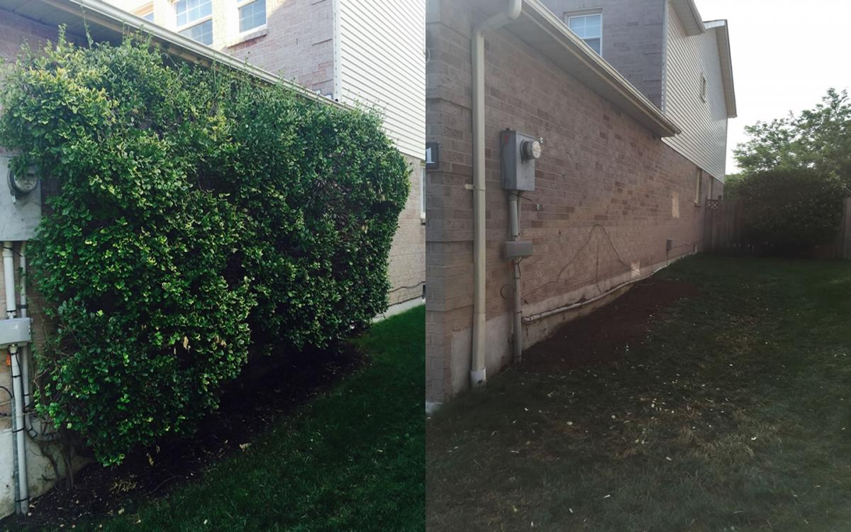 Shrub Removal