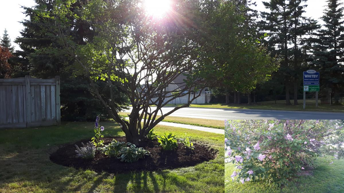 Tree Care Arborist Pruning After