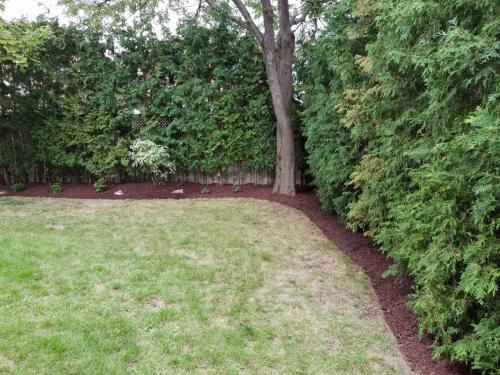 Tree Care Cedar Hedge Pruning 3