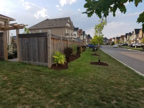 Tree Care Mulch Edging After