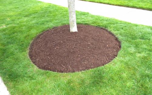 Tree Dressing  Edging with mulch