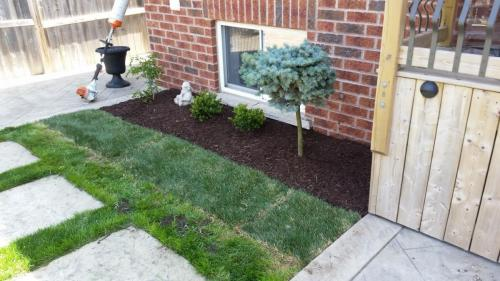 Backyard Lawn Care Sod After