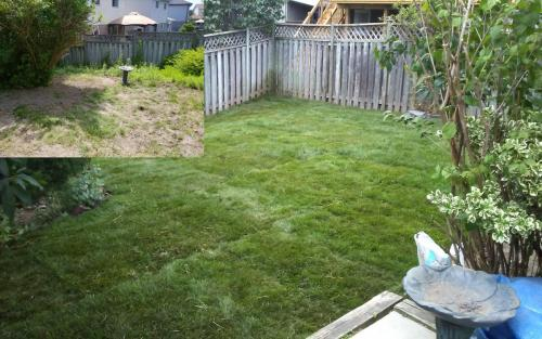 Backyard Sod Installation After1