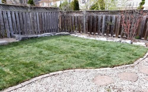 Backyard Sod Installation  Landscaping