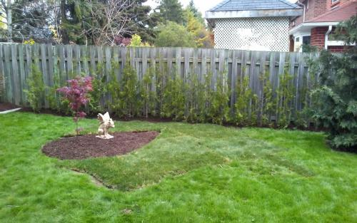 Backyard hedging  Sod