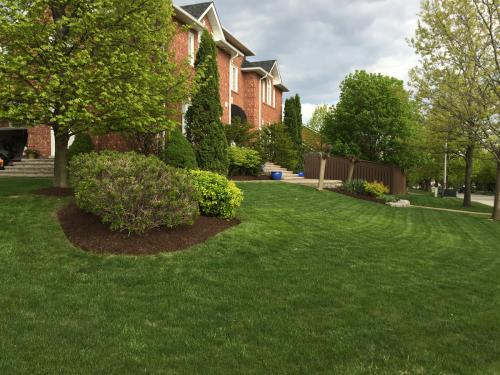 Lawn Care Mow Cutting Grass 1