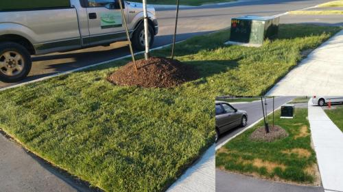 Lawn Care Sod Turf After 1