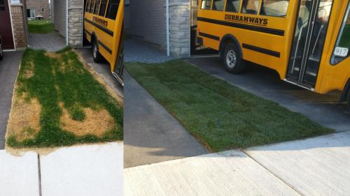 Lawn Care Sod Turf After 2
