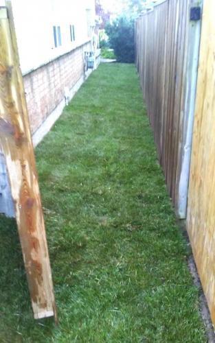 Sideyard Sod Installation