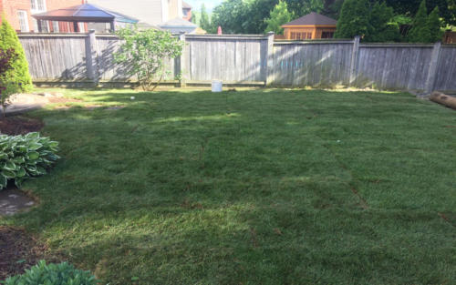 backyard large backyard sod 1