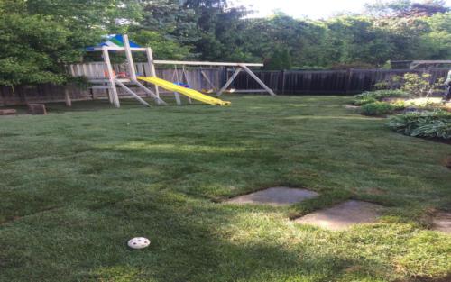 backyard large backyard sod 2