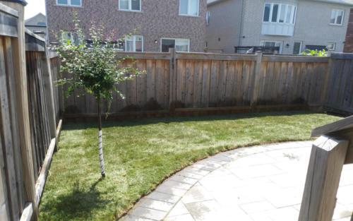 backyard patio sod after