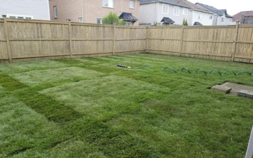 backyard sod after