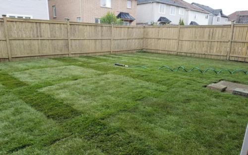 backyard sod after