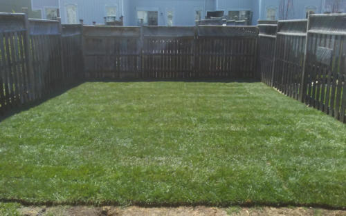 backyard sod installation and grading
