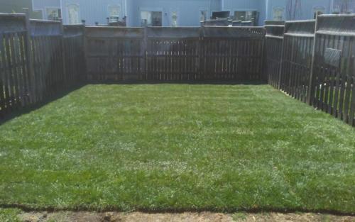 backyard sod installation and grading