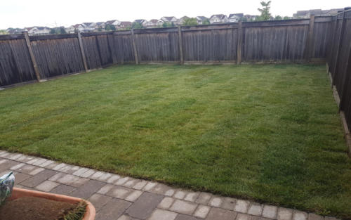 backyard sod replacement