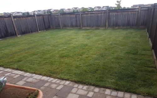 backyard sod replacement