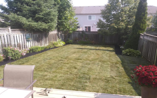 backyard sod with square garden edges