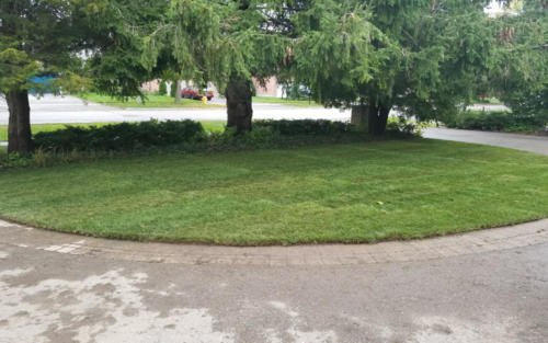 driveway entrance sod replacement