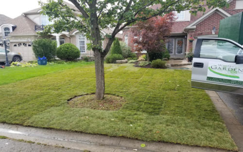front yard sod replacement