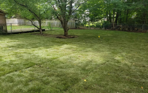 shady backyard sod installation