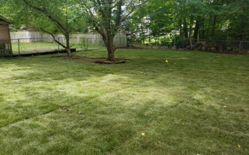 shady backyard sod installation